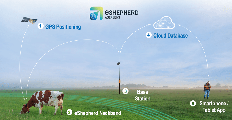 An illustration showing how the eShepherd system works. 1 A satellite provides GPS positioning. 2 The eShepherd Neckband is worn by the cow. 3 A base stations keeps track of the cow. 4 The cloud provides positional information to a cloud database. 6 The farm can access the cloud database from a smartphone or tablet app.